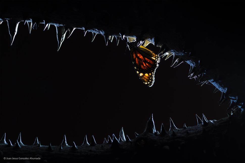 Las Fauces de la Noche by Juan Jesus Gonzalez Ahumada