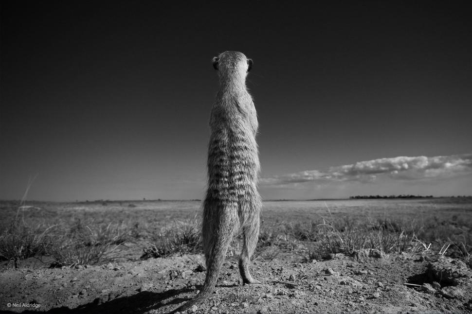 Sentry Duty by Neil Aldridge