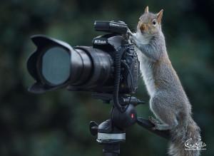 wildlife-photography-squirrels-max-ellis-14