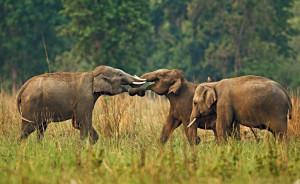 Kameng Elephant Reserve
