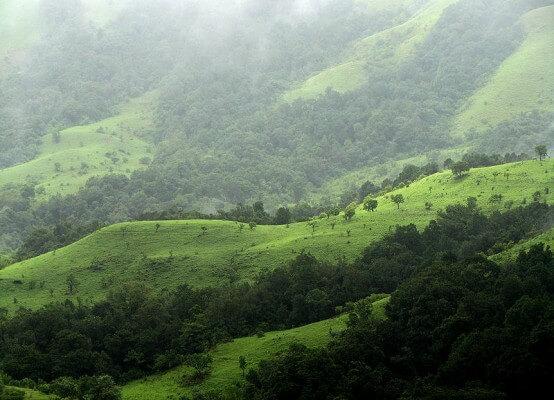 Shola-Forest-Nilgiri-554x400